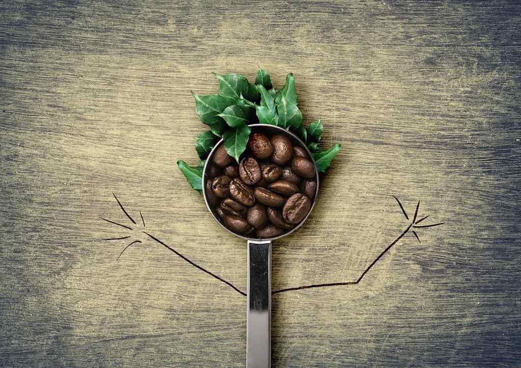 emicrania al caffè verde